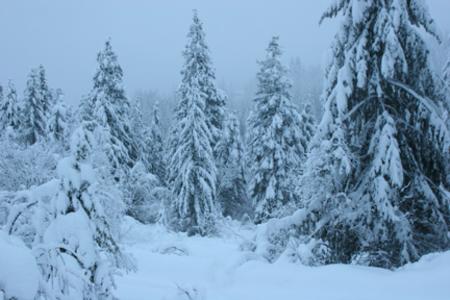 Snow_storm_trees