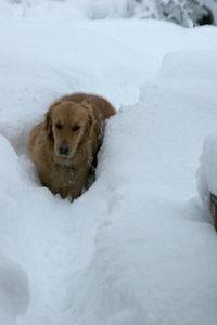 Snowstormdakota
