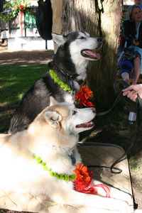 Dogs_at_wedding