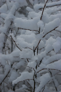 Snow_close_up